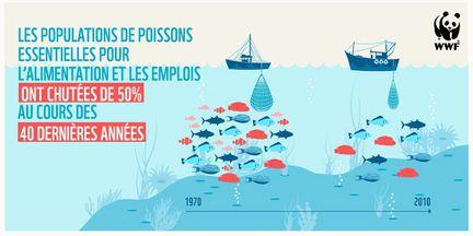 WWF surexploitation peche
