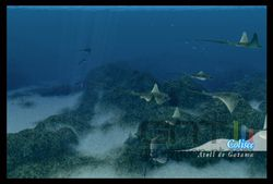 Endless Ocean 2 (30)