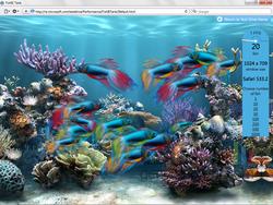fishietanksafari5