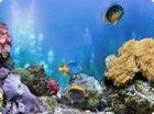 3D Aquarium : un magnifique écran de veille