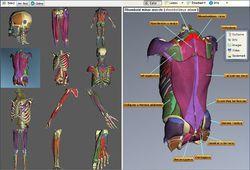 3D Muscles Teacher screen1