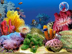 3D Tropical Fish Aquarium II