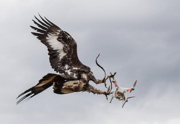 aigle-drone-armee-air-france