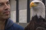 Aux Pays-Bas : on dresse des aigles à chasser les drones