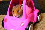 car crash hamster sportif formule 1