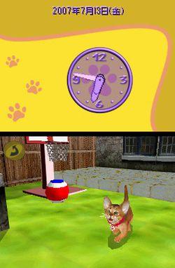 Cats Academy (5)