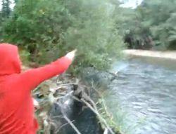 chiots rivière