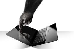 Corning_Gorilla_Notebook