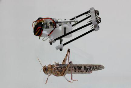 Criquet robot
