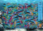 fishsafari5