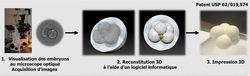 FIV impression 3D