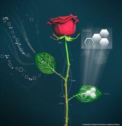 fleur bionique