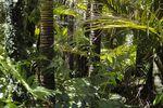 Une forêt tropicale découverte au pôle Nord