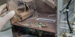 Geckos roscosmos