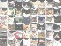 Google-reseau-neurones-chats