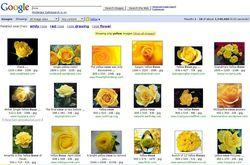 Google_Rose_jaune