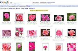 Google_Rose_rose