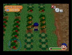 Harvest Moon Magical melody (12)