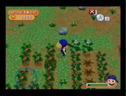 Harvest Moon Magical melody (13)