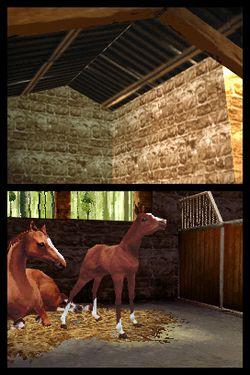 Horse Life   Image 2