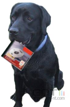 Labrador dvd pirate