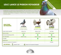 LDLC pigeons voyageurs (1)