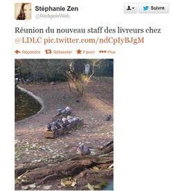 LDLC pigeons voyageurs (2)