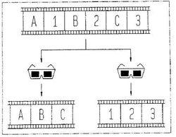 Lunettes 3D écran splitté - brevet Sony - 1