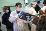 Des chercheurs annoncent une avancée dans le clonage du mammouth laineux