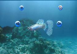 My Aquarium   Image 2