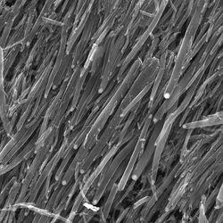 nanofibres carbone