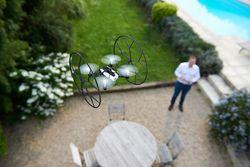 parrot-rolling-spider-jardin