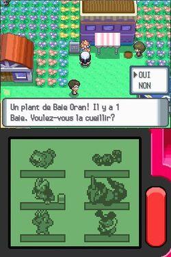 Pokémon Perle - 8