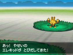 Pokemon Verion Blancet & noire 2 (15)