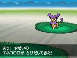 Pokemon Verion Blancet & noire 2 (16)