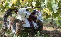 Robot-in-farming--wine-bo-006