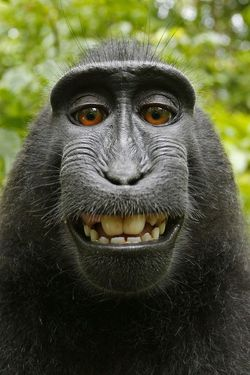 selfie macaque