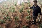 Seul sur Mars pommes de terre