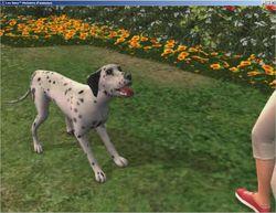 Les Sims Histoires d\'Animaux