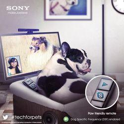 Sony chien