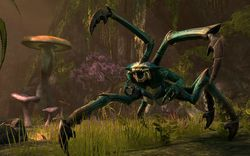 The Elder Scrolls Online - 5
