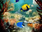Tropical fish : changer d'économiseur d'écran facilement