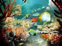 tropical fish screen 2