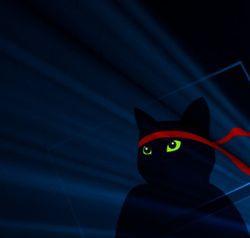 W10-Anniversary-Ninjacat