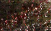 Warhammer Battle March Xbox 360 7
