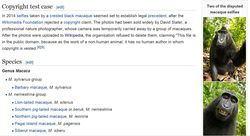 Wikipédia macaque