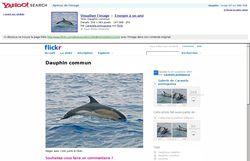Yahoo_Recherche_Images_Avant