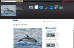 Yahoo_Recherche_Images