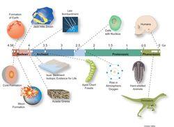 Zircon.Timeline