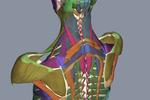 3D Muscles Teacher : connaitre les muscles du corps humain dans les moindres détails